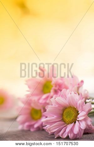 the Floral vintage background with gerbera flowers on wooden backdrop