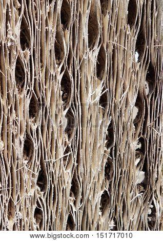 Cactus wood bark detail. Natural background texture