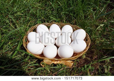 Eggs in a wicker basket on the grass, top view. Basket with eggs on grass. White chicken eggs in a wicker basket on the grass, top view