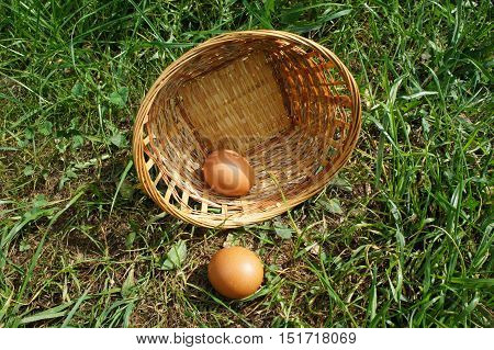 Wicker basket with eggs on grass. Inverted wicker basket with two brown eggs on grass