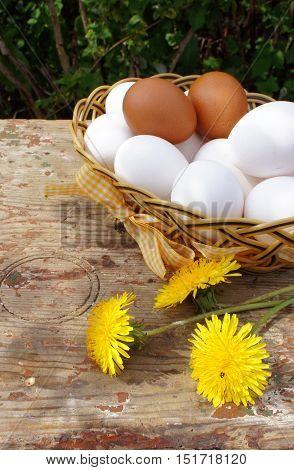 Eggs in a wicker basket in the garden. Eggs in a wicker basket and dandelions on wooden background.