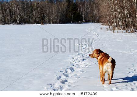 Dog on the watch in a snowy field