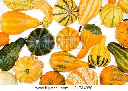 Colorful Background Of Ornamental Autumn Gourds