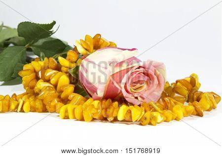 Bud of a gentle rose and amber beads on a white background