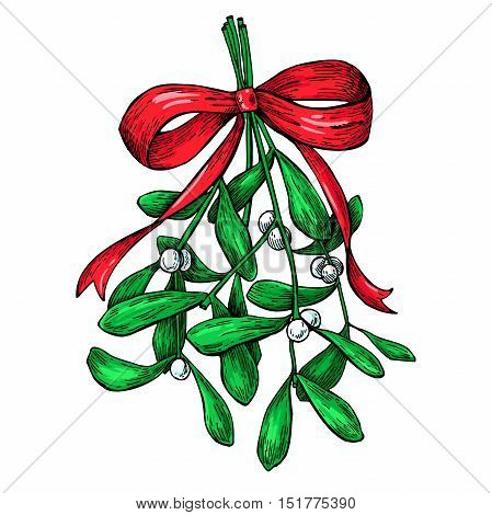 Mistletoe with red bow. Christmas decor plant. Hand drawn vector illustration. Botanical xmas element. Holly with leaves and berry. Great for card, poster, holiday decoration.