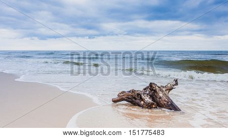Baltic sea coast with trunk tree root in water on empty shore clear yellow sand. Natural background.