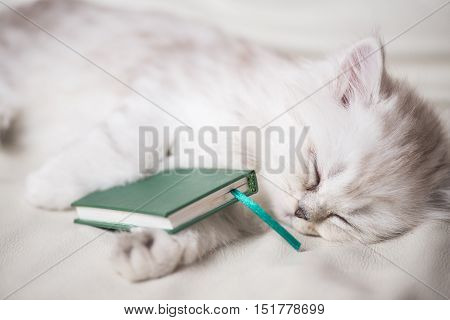 white adorable cat is sleeping after reading the book. portrait close-up macro shot.