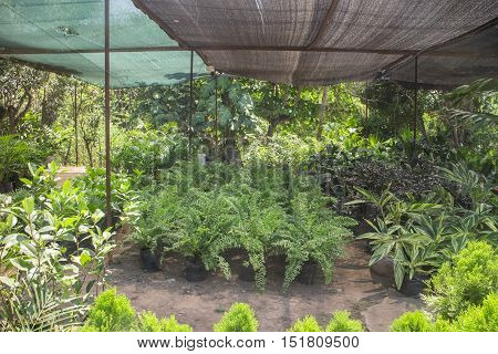 plants outside a nursery for sale in spring