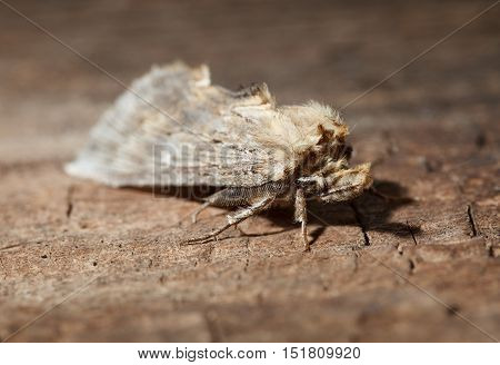 Moth (lepidoptera) sitting on weathered wood background