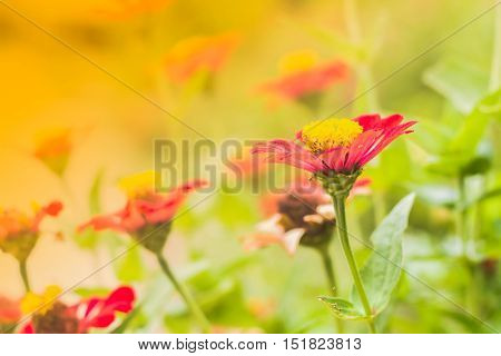 pink gerbera flower in with pot on restaurant table vintage warm tone in garden