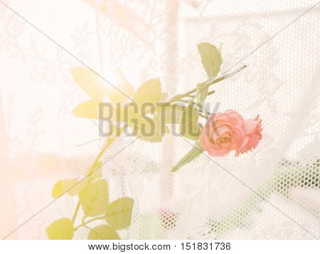 Blur and soft orange rose with soft ligh a sweet background