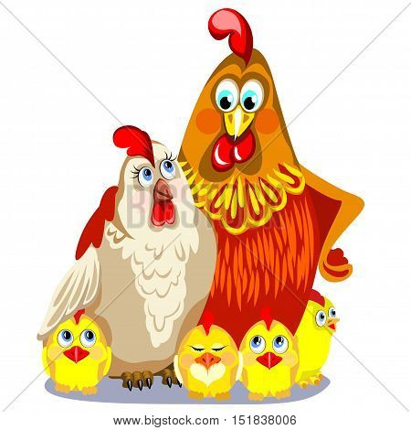 Red cock with his wife and children. The symbol of the year on a white background. White chicken and yellow chicks.