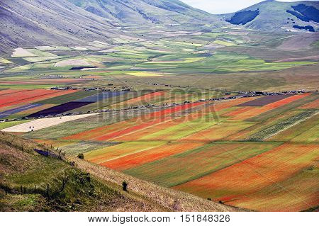 Castelluccio di Norcia (Umbria) 24.06.2012. This shot, highlights the variety of nuances dictated by the colors generated by the variety of flowers, this phenomenon occurs between late May and early July, with the arrival of many people to capture this im