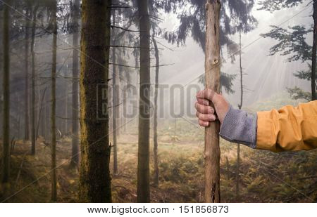 Hiking in the forest with a hiking stick