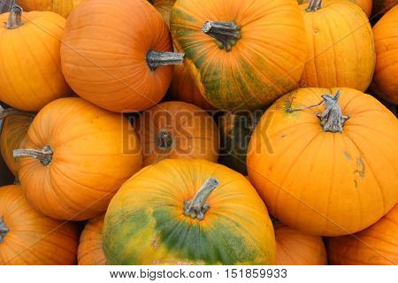 Pumpkin (Cucurbita pepo) of different sizes in a pile.