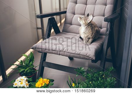 Devon rex cat is walking on a balcony and smelling the fresh air. Snoozing. Cat is enjoying walking and being in fresh air on a private terrace