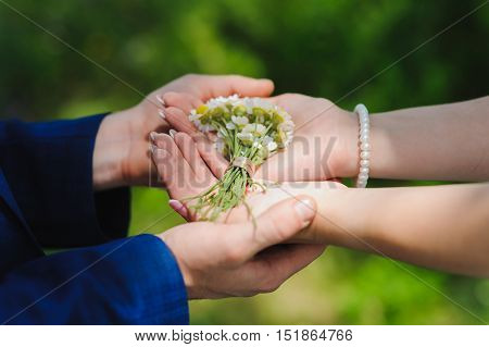Bride and groom holding hands in a chamomile with rings. Miniature bouquet of of camomiles in the hands of the bride and groom.