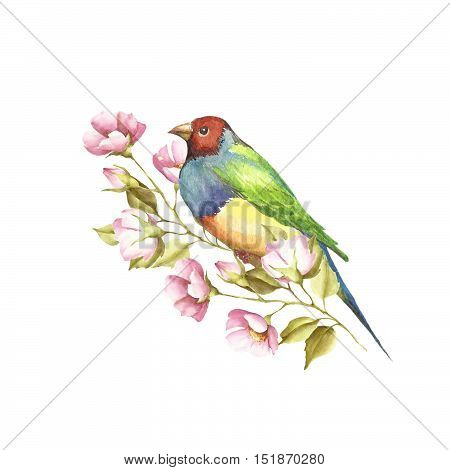 A bird and a sprig. Gouldian Finch. Watercolor illustration