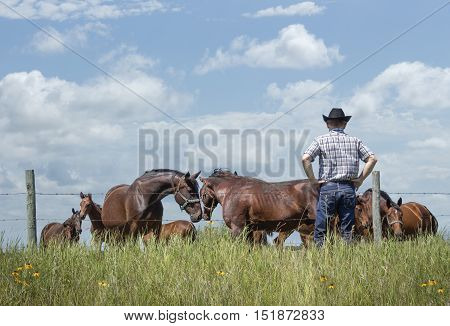 horizontal image of cowboy wearing jeans and cowboy hat standing with hands on hips by fence watching his horses with two horses nudging their head together in love in summer time under blue sky.