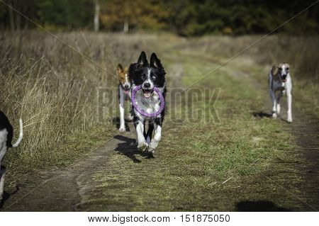 Dogs On A Walk In The Park