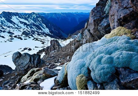 A Vegetable Sheep Clings to a Snowy Mountain.  Lake Angelus, Nelson Lakes National Park ,Southern Alps New Zealand