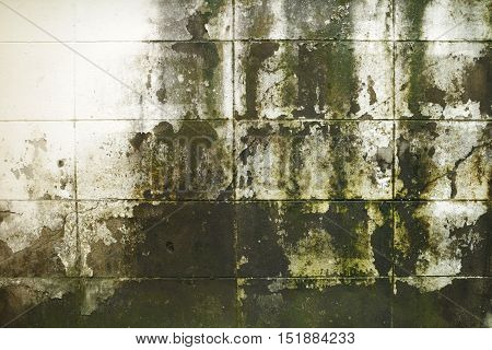 Dirty Mossy Brick Wall in Raining Season Background