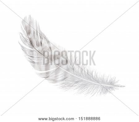 white feather isolated on a white background