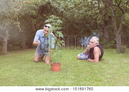Two seniors smoking marijuana joint and relaxing next to the Cannabis plant outdoors in the garden.