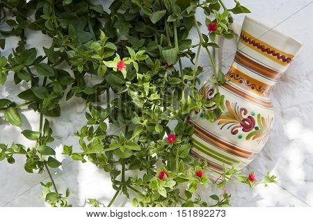Ornamental plant and jug on whiteashed adobe wall