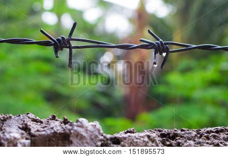 Barbed wire under the rain. Water drops on sharp wire knots. Closeup photo of garden fence protecting property from forest. Concrete wall with razors. Black wire border. House boundaries concept image