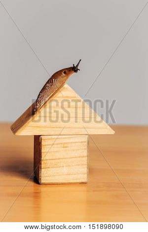 Wooden house of toy building blocks and snail slug gastropod mollusc on roof on timber desk
