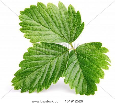 Green Strawberry Leaf Isolated On White