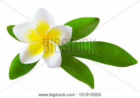 the frangipani flower isolated on white background