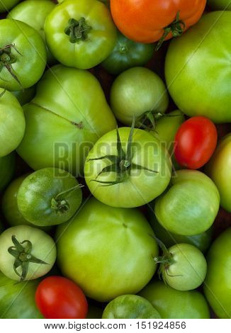 Tomatoes. Red Ripe Tomatoes And Green Immature Tomatoes Close Up. Background Of Green Tomatoes With Red Tomatoes. Red And Green Tomatoes.
