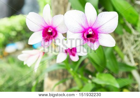 Sweet White pink orchid color flower Nature and flower concept