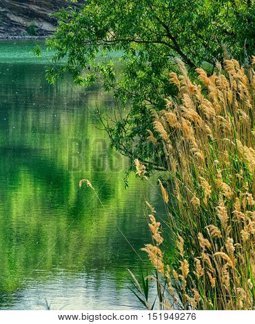 quarry pond with green color water, reed and tree.