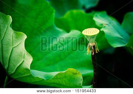 The lotus shaped lamp support in the sunny day