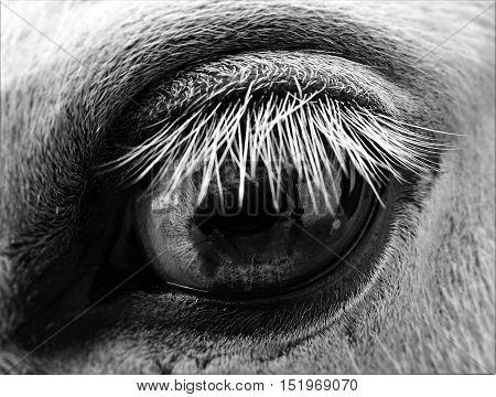 A horse, a horse's eye, big eye, beautiful eye, grey eye.