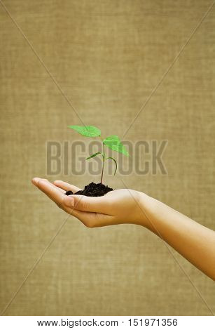 Green small plant with soil on female hand with burlap on background. Growth undertaking cultivation concept.