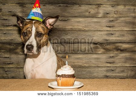 A cute dog at her birthday party.