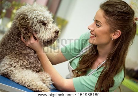 cute Barbe dog and smiling woman