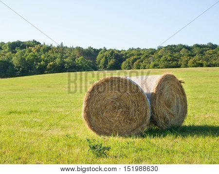 Harvesting of hay - hay bales on the summer meadow