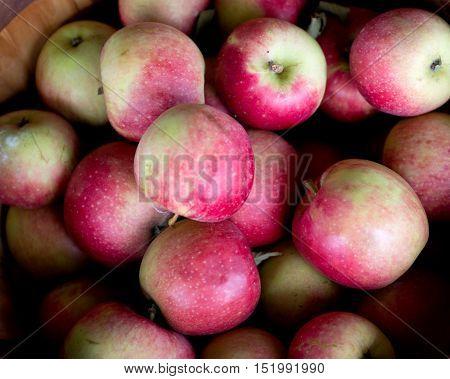 Ripe organic apples in bushel basket on farm