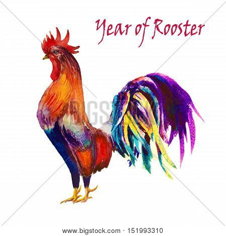 Rooster. Rooster Year. Chinese New Year of the Rooster. Watercolor Rooster New Year card.