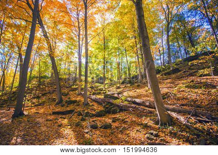 Beautiful forest view with fall color branches, taken in Dudas conservation area, Ontario, Canada.