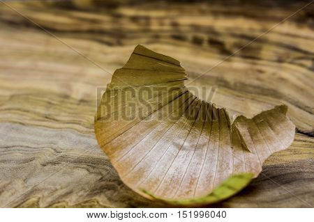 Abstract onion skin on a wooden cutting board