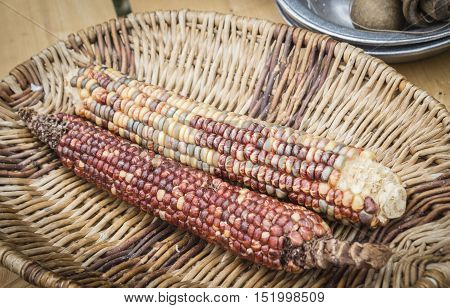 horizontal image of red corn lying in a wicker basket.