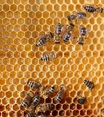 honey comb and a bee working poster