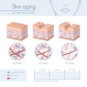 Skin aging stages diagrams collagen and elastin progessive decrease close up skincare infographics poster