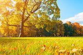Autumn picturesque landscape in sunny autumn landscape park lit by sunlight -autumn park in sunshine. Sunny autumn landscape of autumn park with golden trees. Autumn park landscape in soft sunny light poster